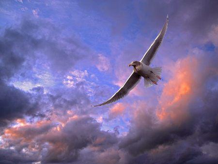 FaithSoaring Churche Eagle